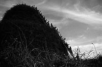 La costruzione della FÚcara richiede l'impegno di dversi operai che sistemano le fascine in modo da realizzare la pira da bruciare in onore di Sant'Antonio Abate.  La FÚcara, la cui costruzione inizia la mattina del 7 gennaio, Ë dedicata a Sant'Antonio Abate ed Ë costituita da un falÚ realizzato con fascine di tralci di vite (sarmente) recuperate dalla rimonta dei vigneti. Sulla cima della fÚcara, la mattina della Vigilia, viene issata un'artistica bandiera sulla quale Ë l'immagine del Santo. L'accensione della FÚcara avviene attraverso una batteria-fiaccolata. Una volta accesa, la FÚcara arde tutta la notte dando vita al fenomeno detto delle fasciddre, le faville che, nell'aria, somigliano ad una pioggia di fuoco. (fonte http://www.comune.novoli.le.it/focara/storia_focara.php).