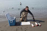 Salmon dipnetting on the Kenai Peninsula, Alaska, USA