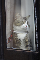 © Licensed to London News Pictures. 06/02/2018. London, UK. WikiLeaks founder JULIAN ASSANG'S cat is seen in the window at the Embassy of Ecuador in London after a court ruling on his arrest warrant. The Australian and Ecuadoran national skipped bail to enter the embassy in 2012 in order to avoid extradition to Sweden over allegations of sexual assault and rape, which he denies. Photo credit: Peter Macdiarmid/LNP