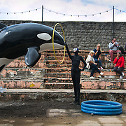 Killer whale jumping out of a toilet - art work by Banksy. On the first day the show is open only a thousand locals who won free ticket gets an advanced entry to the show.Dismaland, a bemusement park set up by artist Banksy show casing more hand 40 artists. The bemusement park is set in a former lido in Weston Super-Mare.After much secrecy the show opened to a small number of locals from Weston Super-Mare Friday and fully to the public Saturday Aug 22.