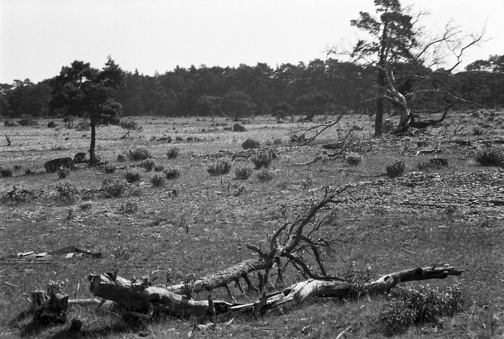 Fårö, Gotland.