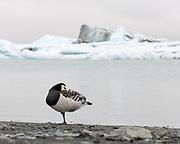 Taken in Southeast Icelandbeach in Iceland