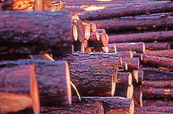 Logs Stacked, Paper Mill