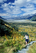 Carol walks by Spaniard stalks in Tasman Valley, Mount Cook National Park, Southern Alps, South Island, NEW ZEALAND. Published in Sierra Magazine, Sierra Club Outings Trip Guide September/October 2003.