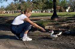 03 Oct, 2005. New Orleans, Louisiana. Hurricane Katrina aftermath. <br /> Local resident Michelle Elise gives food and water to a hungry, abandoned duck on the shores of Lake Pontchatrain in Lakeshore, New Orleans.<br /> Photo; ©Charlie Varley/varleypix.com
