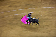 A bull charges the cape of a bullfighter at the Plaza de Toros in Morelia, Mexico.