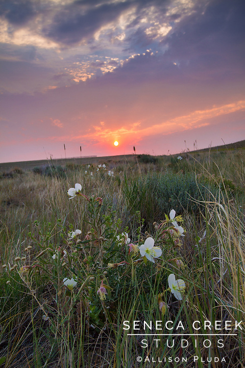 This particular sunrise is the morning after the 2012 Squirrel Hill Wildfire on Sheep Mountain just outside of Centennial, Wyoming.  All the smoke in the air gave the sunrise an eerie effect as a reminder of the beauty and power of natural forces.