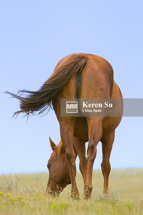 Horses on the ranch, South Dakota, USA
