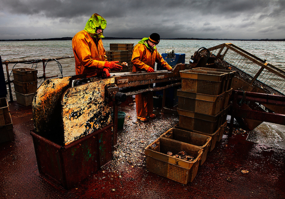 Lee and Rob, working on the 'Othniel Oysters' harvesting barge, Poole Harbour, U.K.<br /> <br /> Othniel Oysters Ltd. has been farming shellfish in Poole Harbour since the mid 1980s.  The farm produces around 400 tons of oysters per year, which are sold in the UK, France and the Far East.
