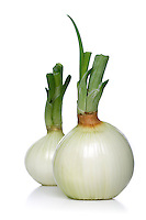 Onion on white background- studio shot