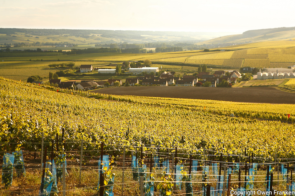 vineyards near Ay, Champagne