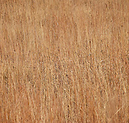 detailed image of grass in Kansas