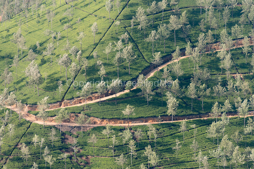 Tea Estate from the air.