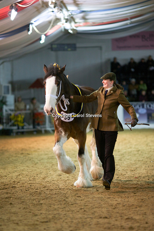 Mrs Emma Livesey's Rohan Sebastian<br /> Winner Newcomers Class<br /> f  2006<br /> Sire  Ruskington Conner<br /> Dam  Ddrydwy Lucky Lass