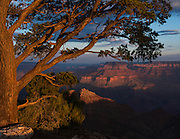 A tree on the rim of the Grand Canyon reaches out and catches the warm light of a summer sunrise.