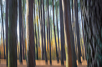 Abstract background of trees showing motion blur created with in camera movement.