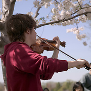 Teenage boy playing violin near the Jefferson Memorial under the cherry trees for crowd of people during the Annual Cherry Blossom Festival in Washington DC, USA<br />