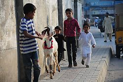 August 26, 2017 - Pakistan - Children playing with sacrificial animals ahead of Muslim Eid al-Adha holiday in Islamabad. (Credit Image: © Zubair Abbasi/Pacific Press via ZUMA Wire)