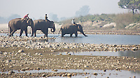 Mahouts riding elephants across the Karnali River, Bardia National Park, Nepal