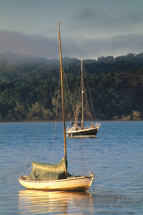 Morning light and fog over sailboats anchored in calm water Tomales Bay near Point Reyes Marin California Sailboats anchored and fog at sunrise in calm water, near Point Reyes, Tomales Bay, Marin County, California