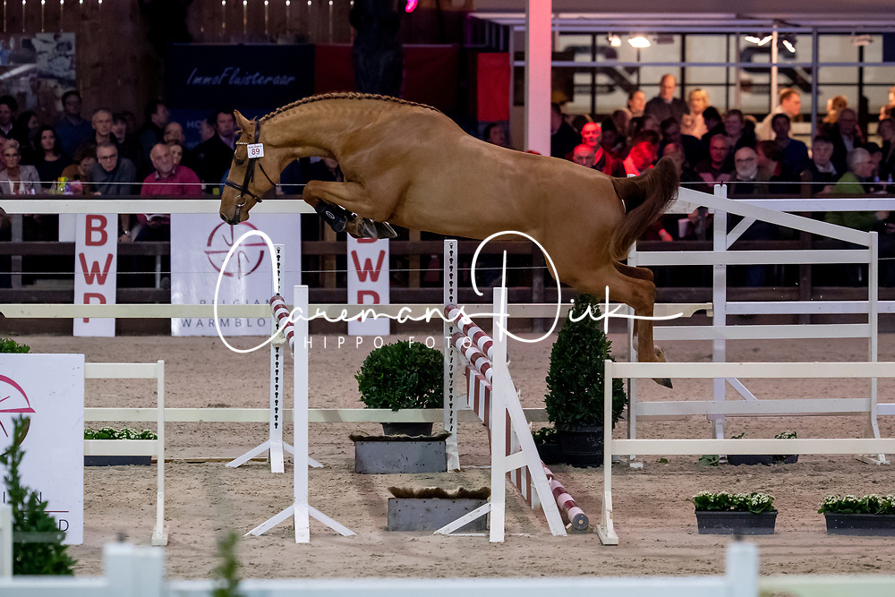 089, Elmo Van De Hoek Z<br /> BWP Hengstenkeuring -  Lier 2020<br /> © Hippo Foto - Dirk Caremans<br />  17/01/2020
