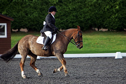 Affiliated dressage at Sheepgate Equestrian Centre..1-11-2009.Horse 277