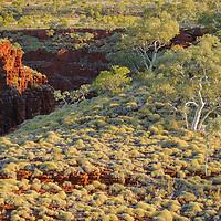 Spinifex grassland above rock gorges in Karijini National Park. Western Australia.
