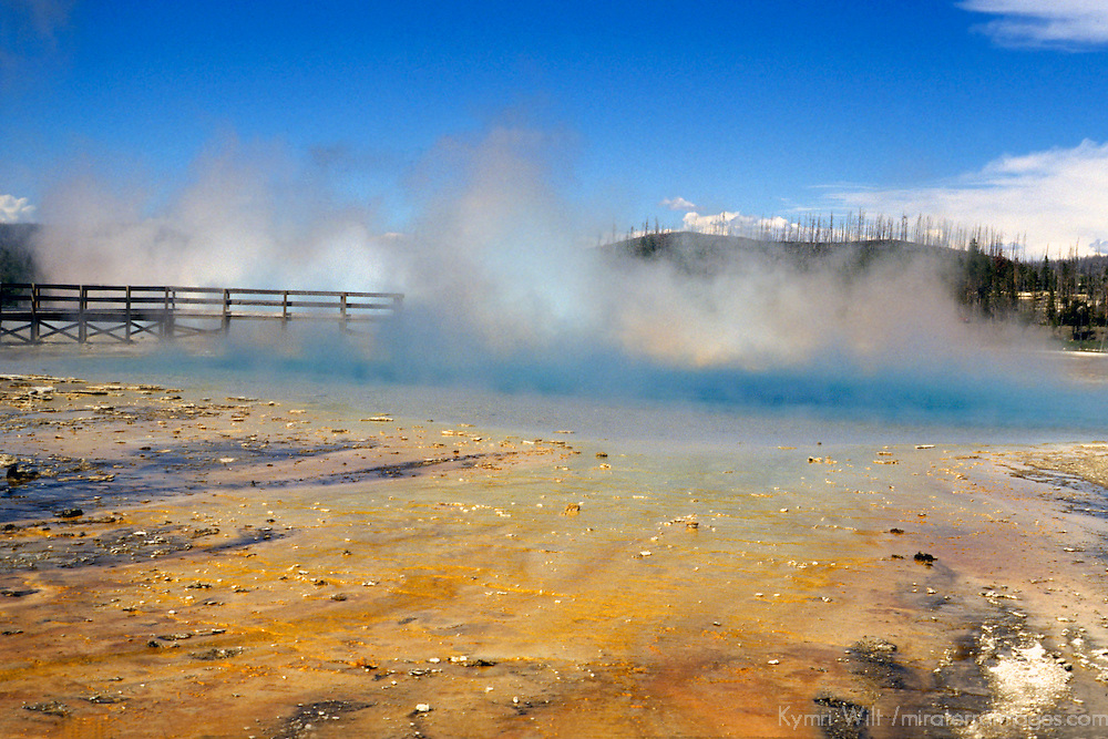 North America, USA, United States, Wyoming, Yellowstone National Park.  Geothermal activity at Yellowstone.