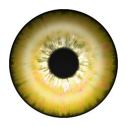 gold and red eye iris eye iris eye iris