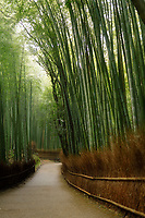Arashiyama bamboo forest path artistic tranquil scenery in Kyoto, Japan.