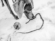 Sugar, a tennis ball, and a small dead snake in the snow