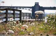 Wildflowers dappled bathed in sunlight near the Highway 101 bridge in Aberdeen Washington