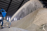 15 NOVEMBER 2005 - FRANKLIN, LA:  Raw sugar is blown into the warehouse at the St. Mary Sugar Co-Op Mill near Franklin, Louisiana during the 2005 sugar cane harvest. Sugar mills across Louisiana are being forced to warehouse tens of millions pounds of raw sugar because the sugar refineries in New Orleans are closed because of damage from Hurricane Katrina. The refineries are scheduled to reopen in late 2005. Louisiana is one of the leading sugar cane producing states in the US and the economy in southern Louisiana, especially St. Mary and Iberia Parishes, is built around the cultivation of sugar. The mill employs about 180 people. The two mills near Franklin contribute about $150 million (US) to the local economy. Sugar growers in the area are concerned that trade officials will eliminate sugar price supports during upcoming trade talks for the proposed Free Trade Area of the Americas (FTAA). They say elimination of price supports will devastate sugar growers in the US and the local economies of sugar growing areas. They also say it will ultimately lead to higher sugar prices for US consumers. PHOTO BY JACK KURTZ