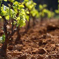 Un an dans la vigne - Story of a french grapewine- part 1