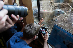 © licensed to London News Pictures. London, UK 08/08/2013. Photographers taking pictures of Komodo dragon, Raja, who appeared in James Bond Skyfall film at London ZSL Zoo on Tuesday, August 08, 2013. Komodo dragons are the biggest and heaviest lizards in the world. Full-grown adults can reach 10 feet long and weigh more than 140 kgs. Zookeepers prepare these activities to encourage the animals to hunt for their food or inspire mental challenges for them to keep them active and fit. Photo credit: Tolga Akmen/LNP