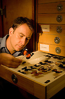 James Cook University butterfly researcher Darrell Kemp looks at butterfly specimens.