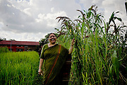 Dr. Vandana Shiva, founder of Navdanya Foundation and Bijavidyapeeth (College of Seeds) in Dehradun, Uttarakhand, India, holds a millet plant as she walks through her farm on 5th September 2009. Dr. Vandana Shiva is a physicist turned environmentalist who campaigns against genetically modified food and teaches farmers to rely on indigenous farming methods.. .Photo by Suzanne Lee / For The National