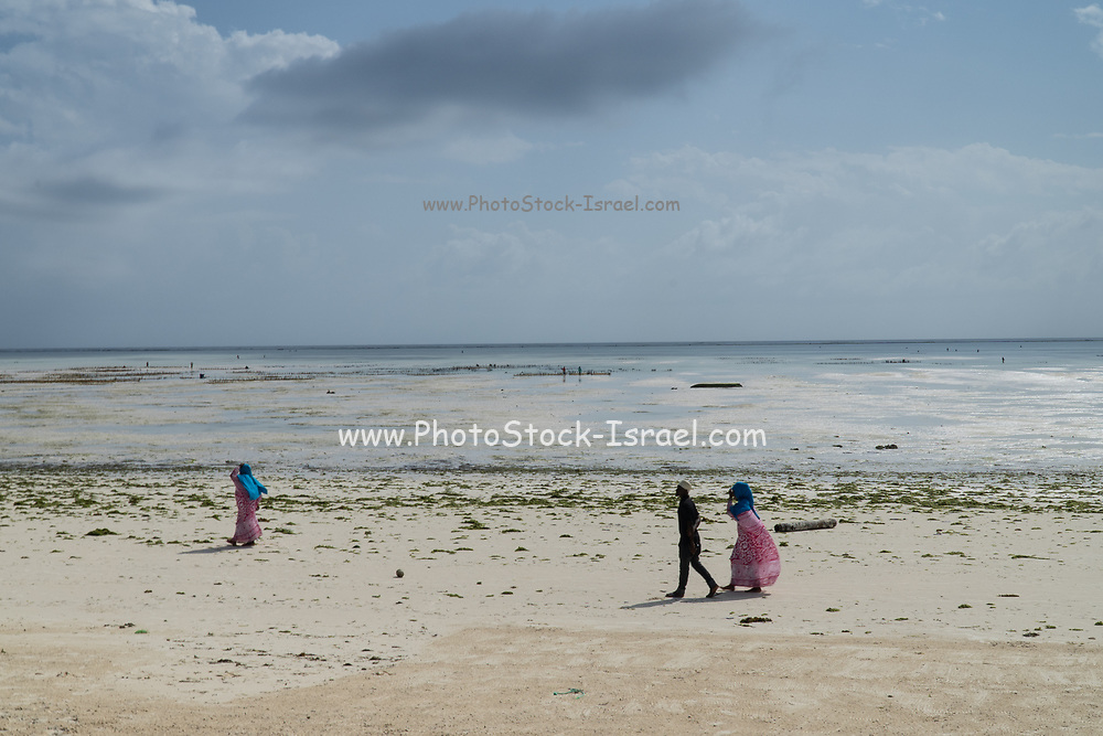 Local people on the beach at low tide near an Algae farm. East Coast, Zanzibar