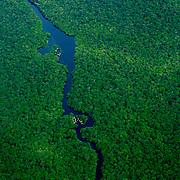Congo - Rain Forest