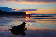 A dog on the beach at Sopelana, Bizkaia, Spain