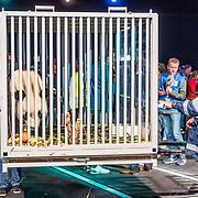 NLD/Amsterdam/20170412- Aankomst reuzenpanda's WU WEN en XING YA in Nederland,  Panda klaar voor vertrek in kooi