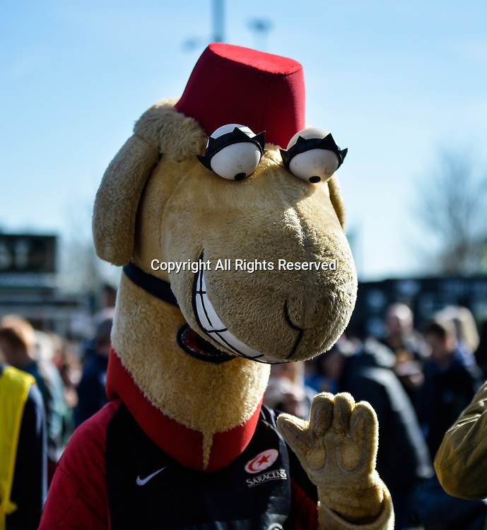 22.03.2015. Franklin Gardens, Northampton, England. LV Cup Final. Saracens versus Exeter Chiefs. The Saracens mascot entertains the crowds before the match.