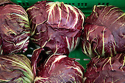 A pile of fresh, ripe red cabbage (Brassica oleracea)