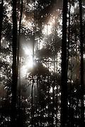 Barroso_MG, Brasil...Arvores as margens da BR 265 em Barroso, Minas Gerais...The trees next to BR 265 in Barrroso, Minas Gerais...Foto: LEO DRUMOND / NITRO