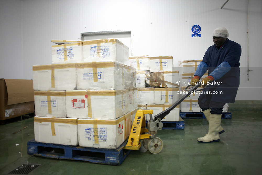 An employee of fish product importers New England Seafoods, pulls a heavy pallet of polystyrene cases of fresh Maldives tuna