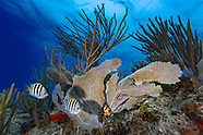 My Underwater Favorite View