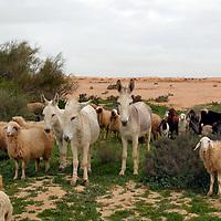 Fauna - Horses and Donkeys