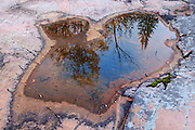 Reflection of trees in pool on rocky shoreline of Lake Superior<br /> Rossport<br /> Ontario<br /> Canada