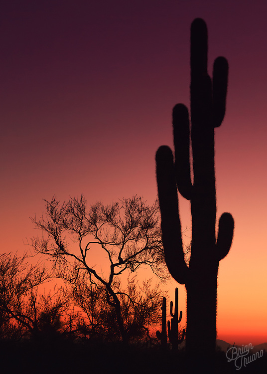 Saguaro cacti silhouetting the  horizon's warm glow as the sun sets in the deserts of Arizona.