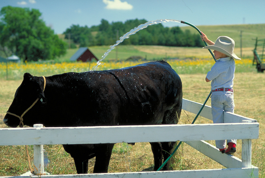 Boy watering down cow, Arthur County, Nebraska